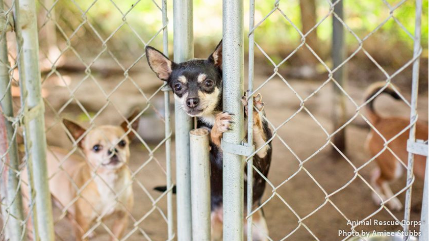 132 dogs were found in deplorable conditions in Virginia. Photo: Amiee Stubbs Photography via Atlantic Small Dog Rescue's Facebook Page.