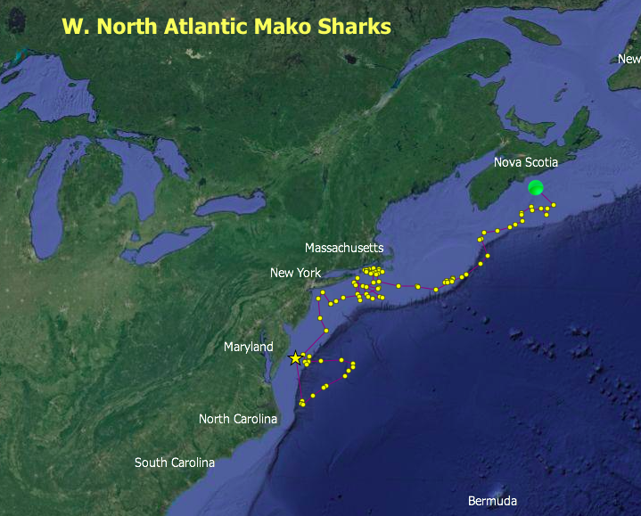 St. Mary's path. Source: nova.edu/ocean/ghri/tracking/