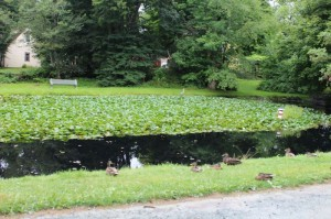 The Linden Lea duck pond. Photo: Halifax Examiner