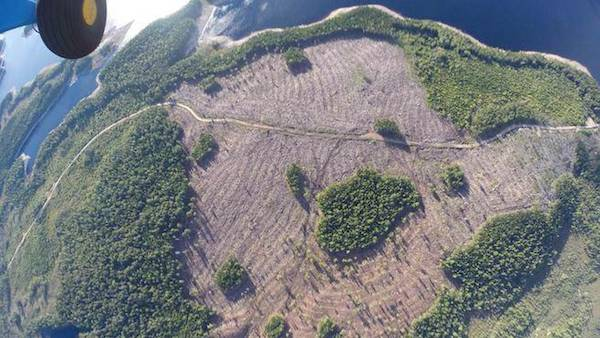 This aerial photo shows a logging operation in an environmentally sensitive area. Photo: Ecology Action Centre