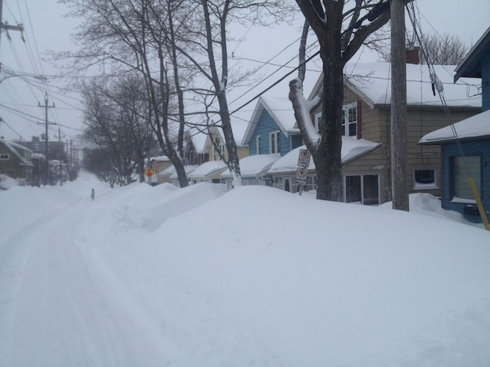 Tulip Street, Wednesday afternoon. Photo: Halifax Examiner