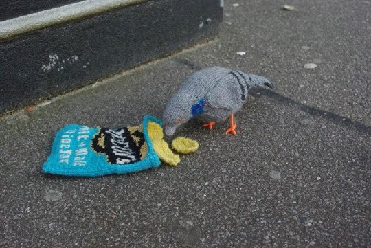 Pigeon from tumblr