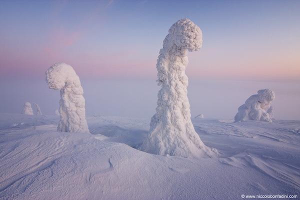 snowtrees_bonfadini_960