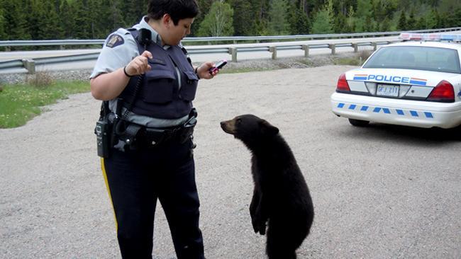 767266-bear