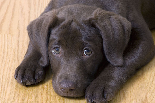 sad-puppy-1200