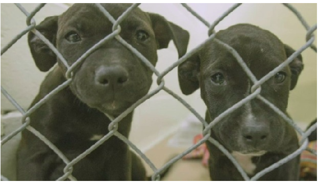Two of the dogs seized Saturday. Photo: Nova Scotia SPCA