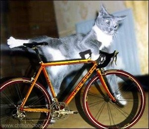 A meme, probably a photo montage, of a grey and white cat leaping onto a ten speed bicycle.
