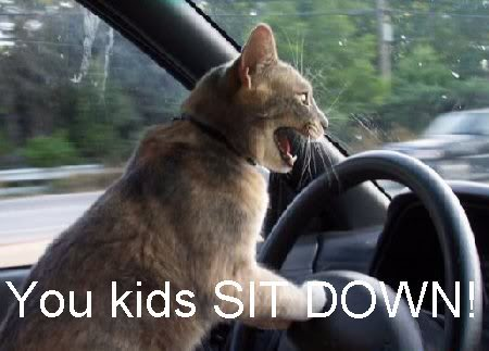 driving_cat