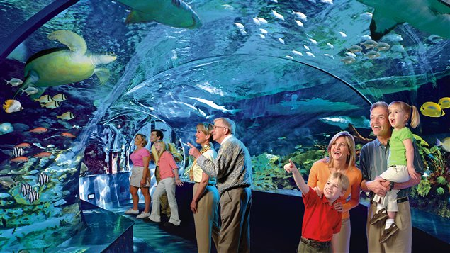 A fictionalized image of the Ripley's Aquarium, showing un-rushed adults and well-behaved children. Photo: rcinet.ca