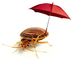 gI_86216_Bed_bug_resistant_to_pesticide