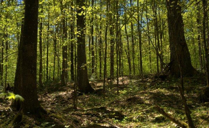 Photo: Alain Belliveau / Medway Community Forest Coop
