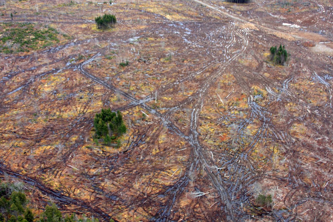 Aerial photo of Northern Pulp harvest, courtesy Jamie Simpson