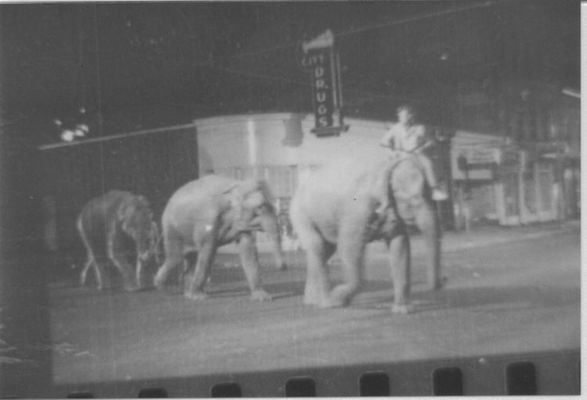 Shirley leads a line of elephants down Main Street in Yarmouth en route to the circus site at the exhibition grounds. (BOB BROOKS PHOTOGRAPHY)
