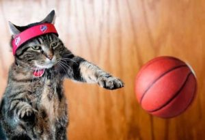basketball cat
