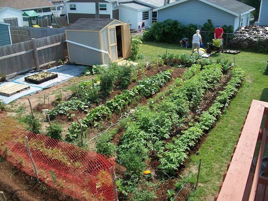 The Food Bank's community garden pre-vandalism. Photo: Facebook