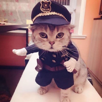Funny-Halloween-pet-cat-dog-police-costume-cosplay-with-dog-police-hat-small-dog-puppy-party