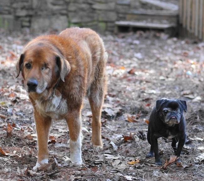 old-friends-senior-dog-sanctuary