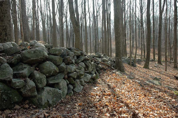 A typical New England stone wall. Photo: field-notebook.com