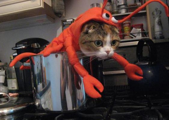 lobster-cat-1