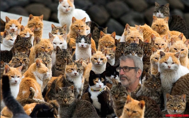 tim-cats
