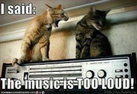 cat-loud