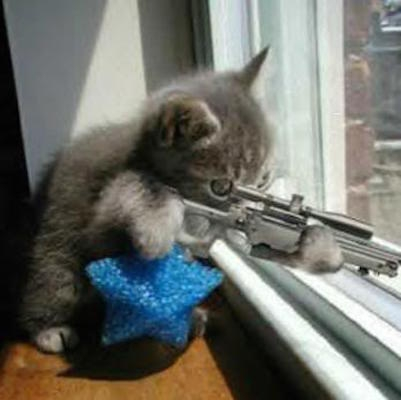cat-with-gun