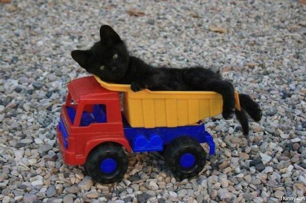 kitten-truck