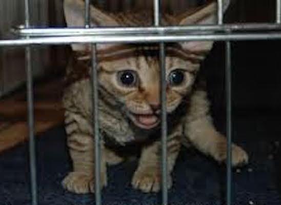 prison-kitty