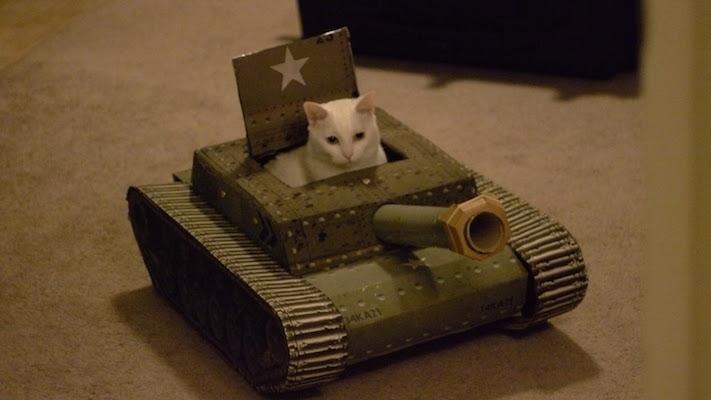 cat_tank_01