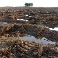 Biomass, Freedom of Information, and the Silence of the DNR Company Men