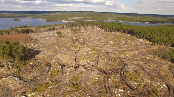 Clearcut with forest and water in background.