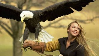 Birds of prey and the meaning of life, Shearwater edition