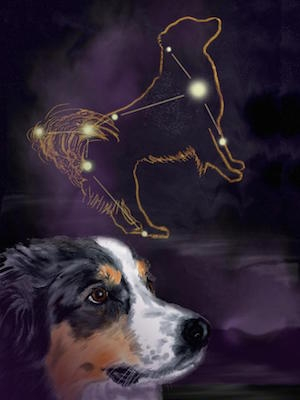 A graphic of the constellation Canis Major with a dog in the foreground.