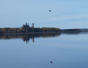 Northern Pulp mill in background, water in foreground, bird overhead