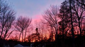 Beautiful sunset with trees
