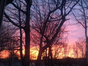 Beautiful sunset with trees.