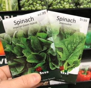 Hand holding two packets of spinach seed