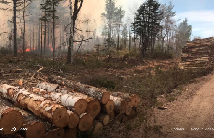 Piles of cut logs and smoke in the background.