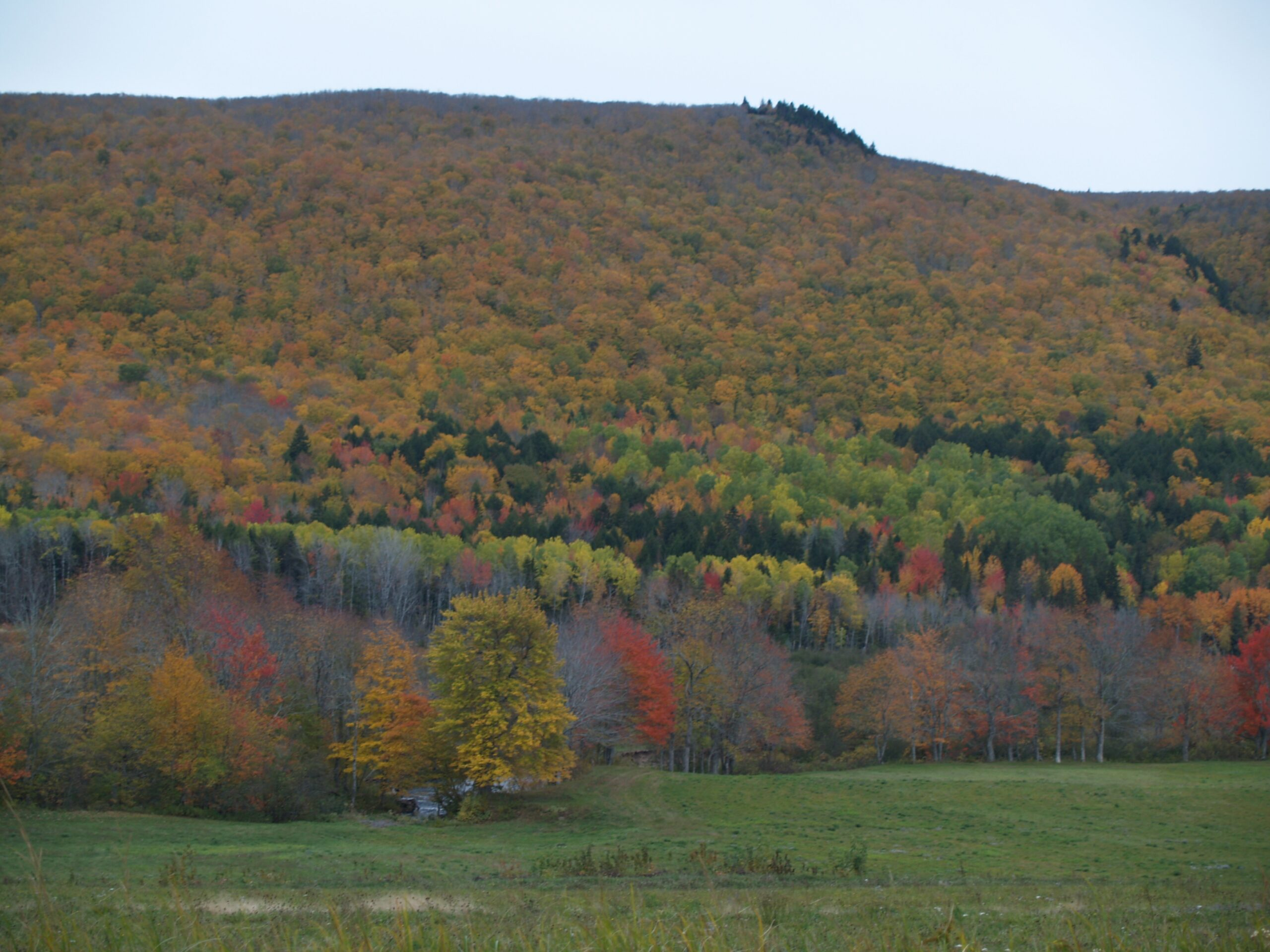 Fall foliage in temperate forest at High Head, Wentworth, Nova Scotia. Photo Joan Baxter