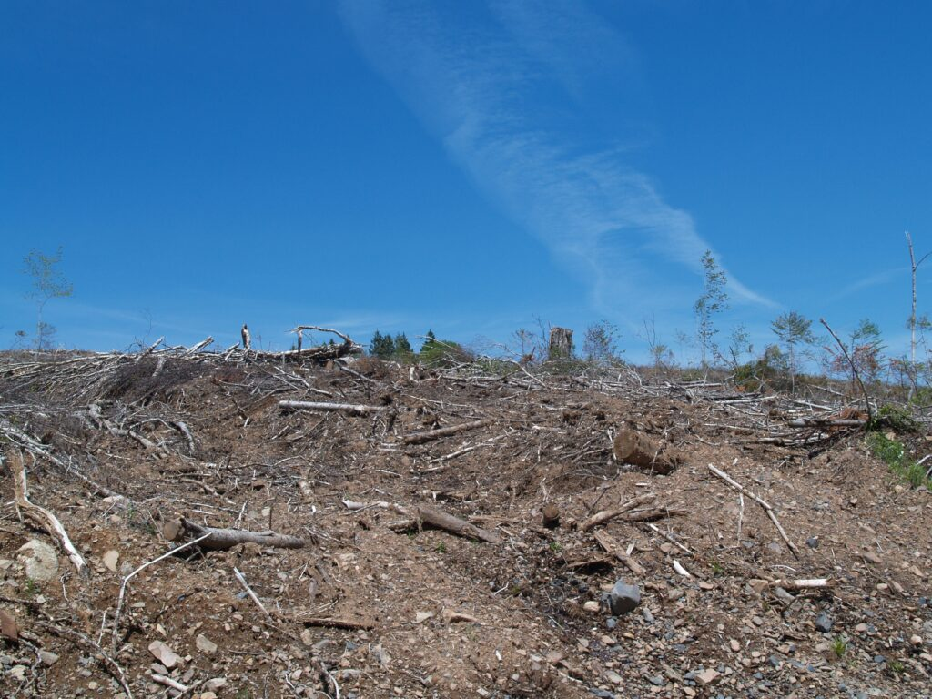 Clearcut near Bass River, Nova Scotia. Photo: Joan Baxter