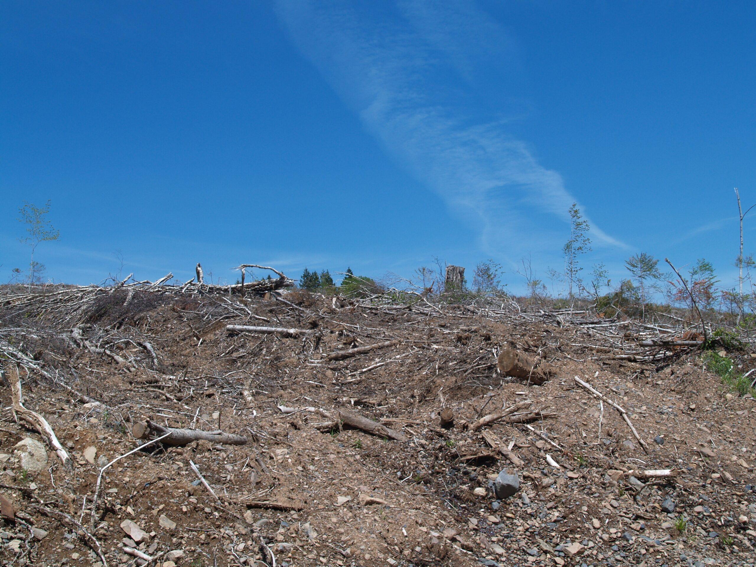 Clearcut near Bass River, Nova Scotia. Photo: Joan Baxter