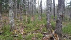 Ecological forestry on Greg Watson's woodlot promotes restoration and diversity (Photo: Greg Watson)