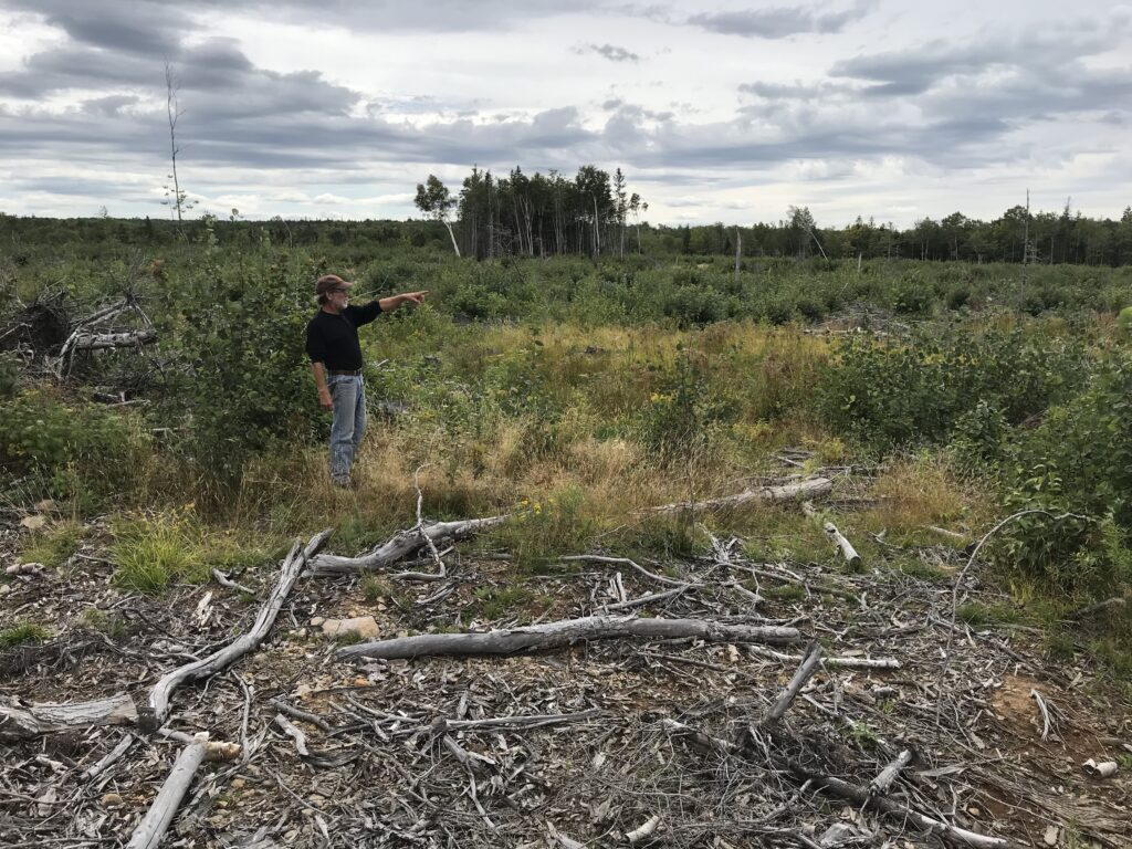 Don Osburn in clearcut area slated for herbicide spraying. Photo: Joan Baxter