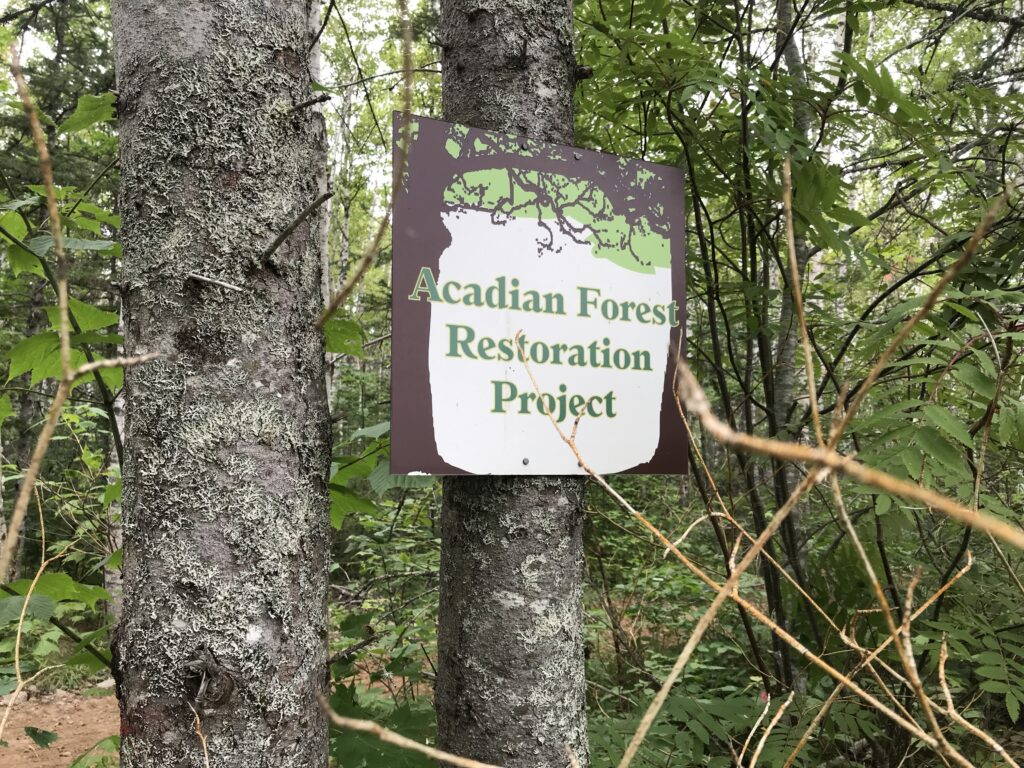 """Doug Kemp is working to restore 80 acres of Acadian Forest on his land, using Jamie SImpson's book on the subject as his """"bible."""" Photo: Joan Baxter"""