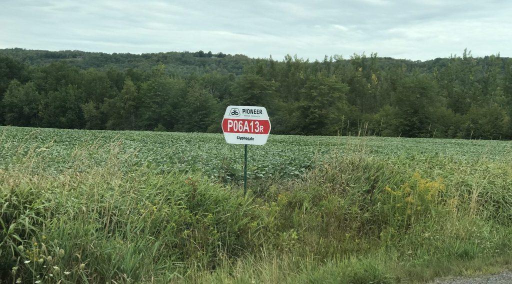 Glyphosate sign in corn field Kings County. Photo: Joan Baxter