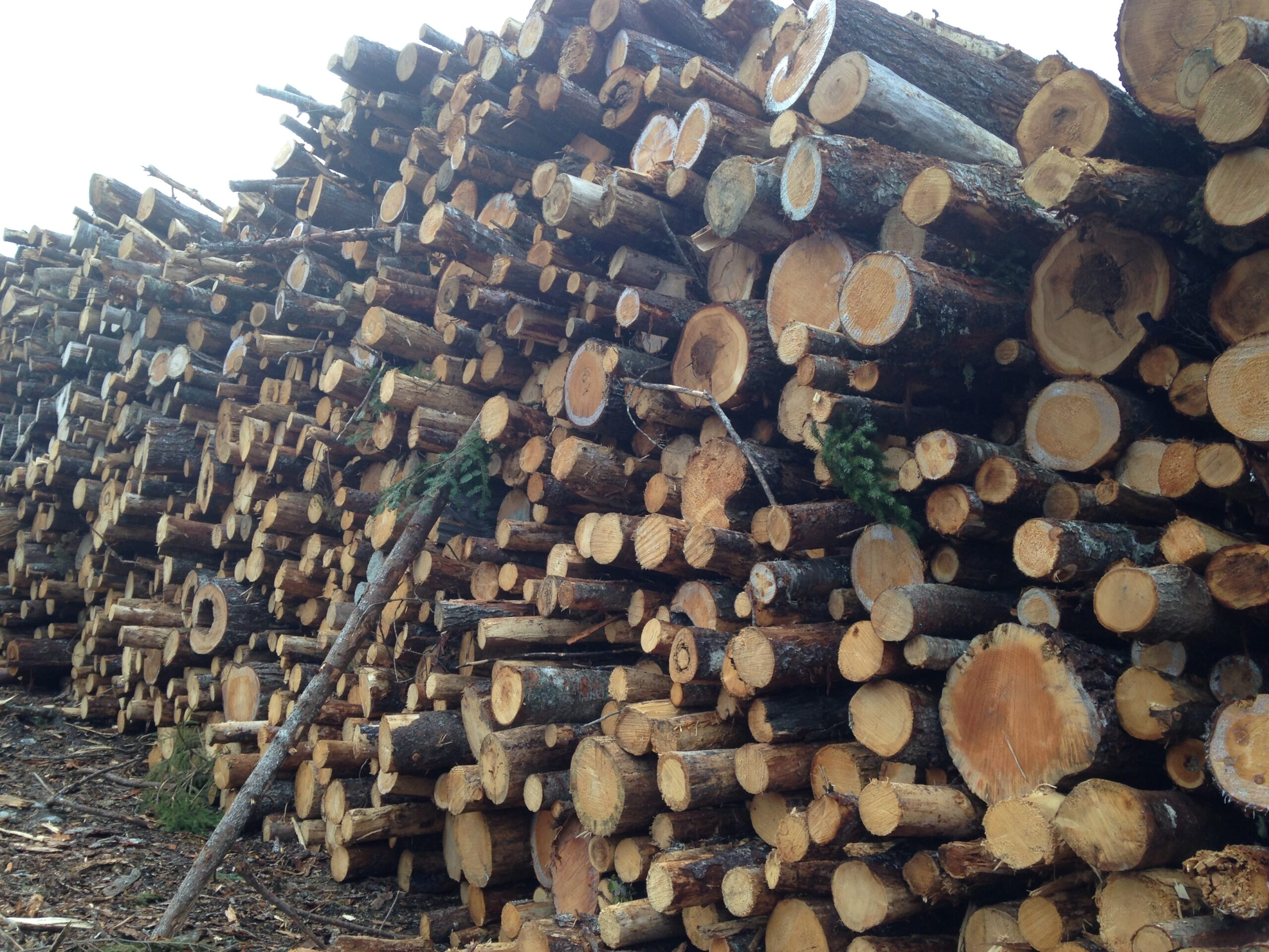 A closeup of a very large pile of logs from smaller trees that were cut down too soon.