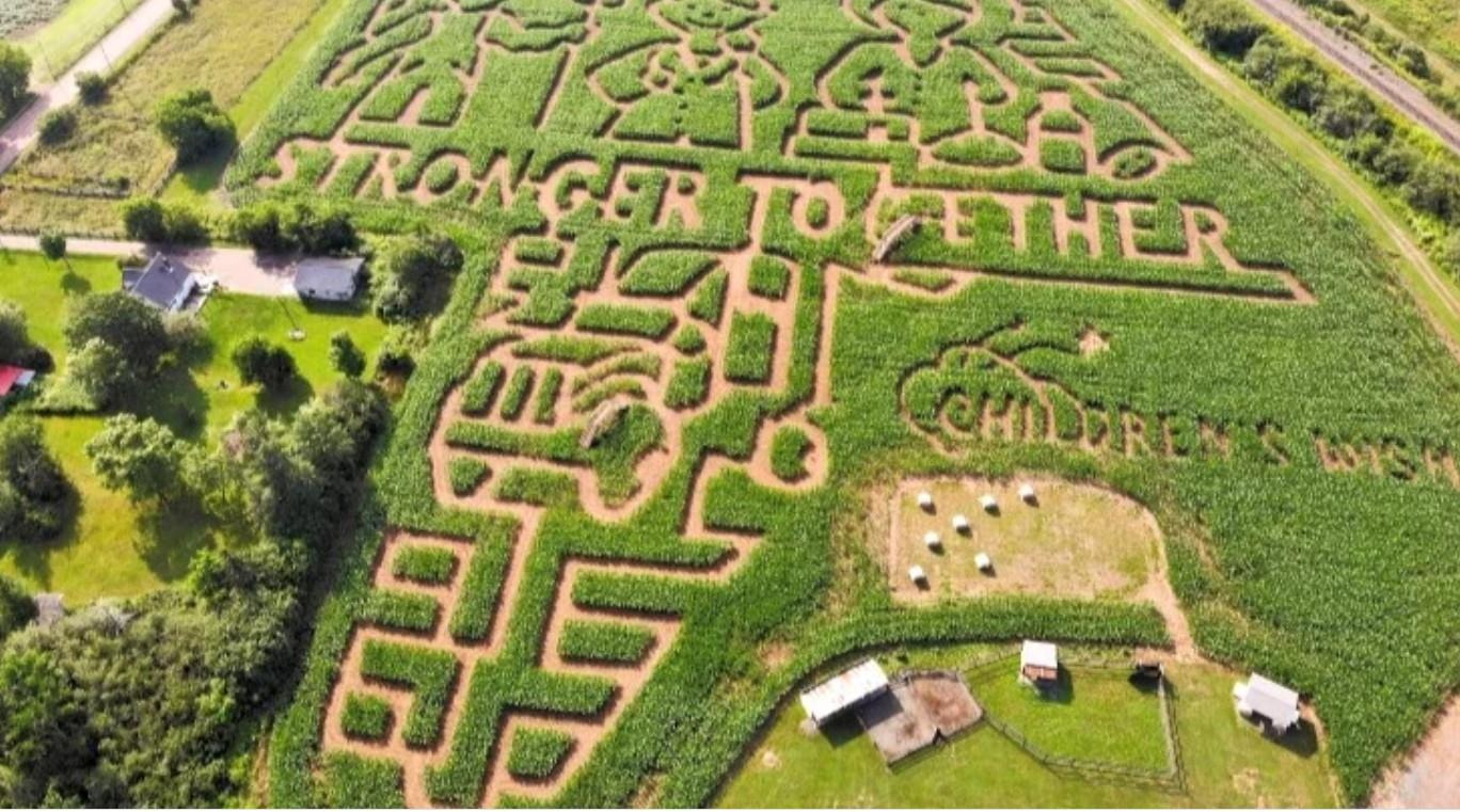 Aerial shot of corn maze