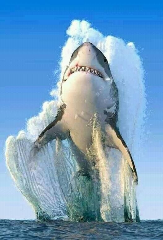 3d art image of a shark breaking through waves