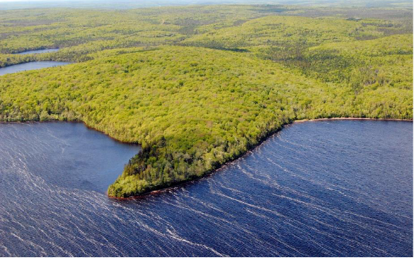 Aerial photo of forested land on the water, with a point jutting out.