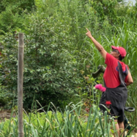 Evelyn White, wearing a red Tshirt and red cap, stands in her garden pointing towards where she saw the cardinal.